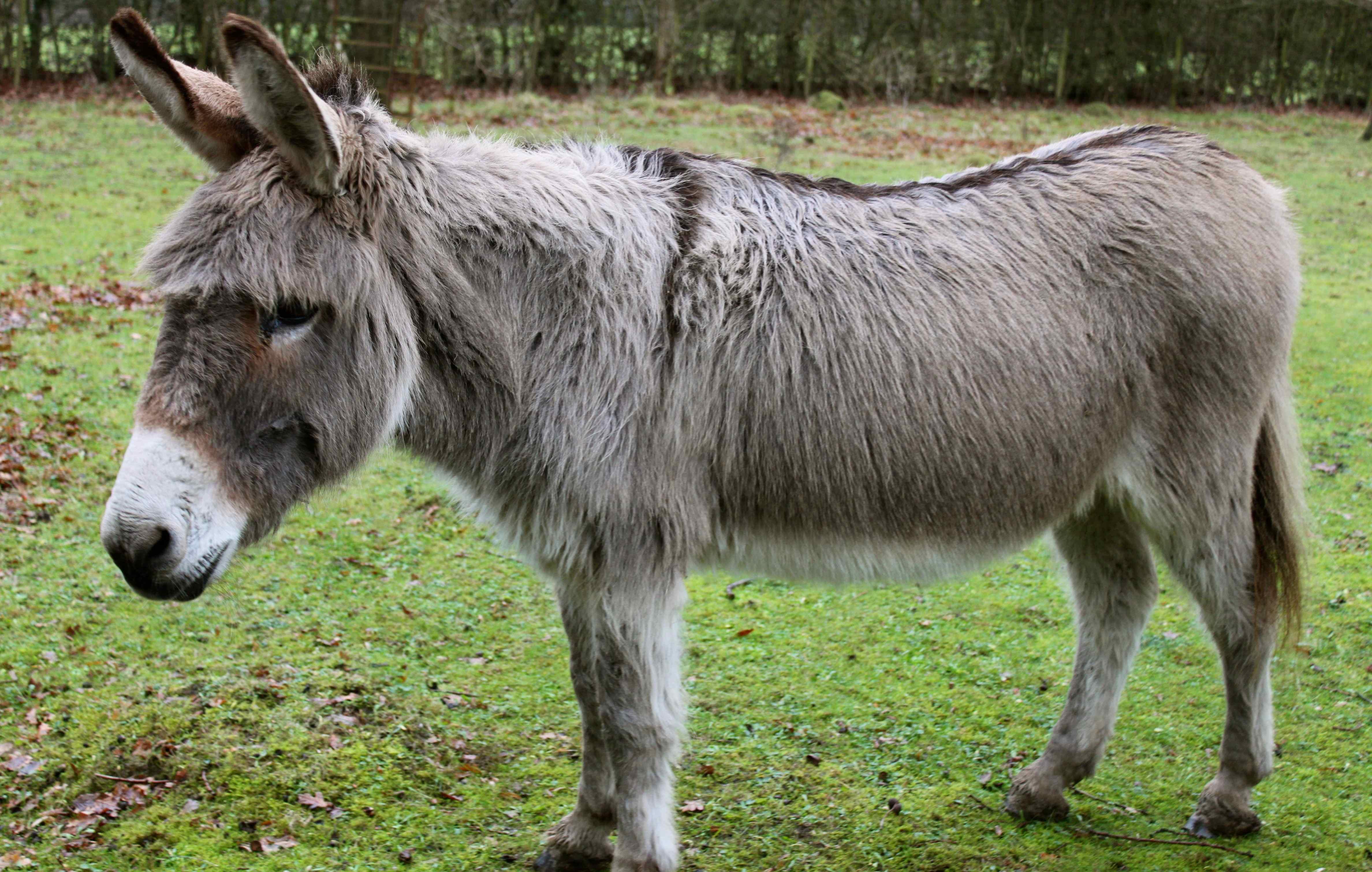 Donkey Images Femalecelebrity