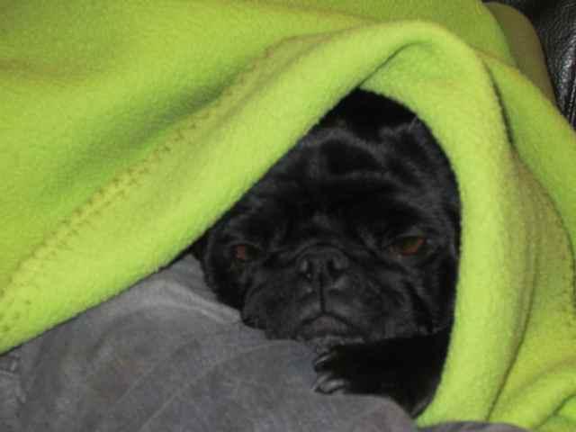 Beryl under blanket