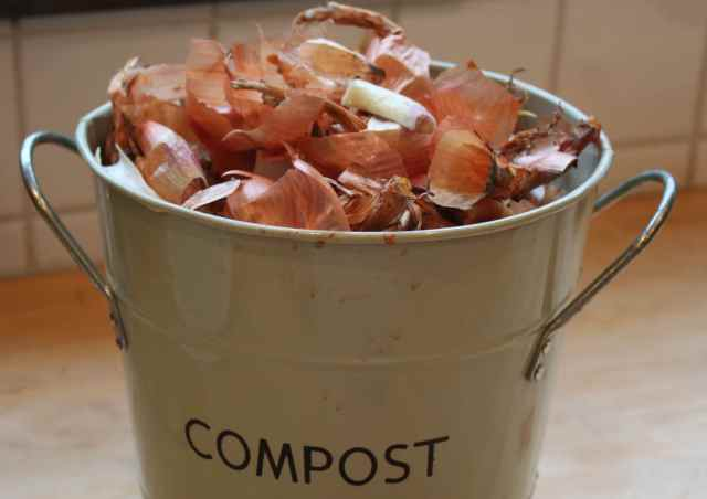 Shallots in compost
