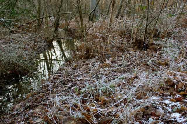 frosty beside stream