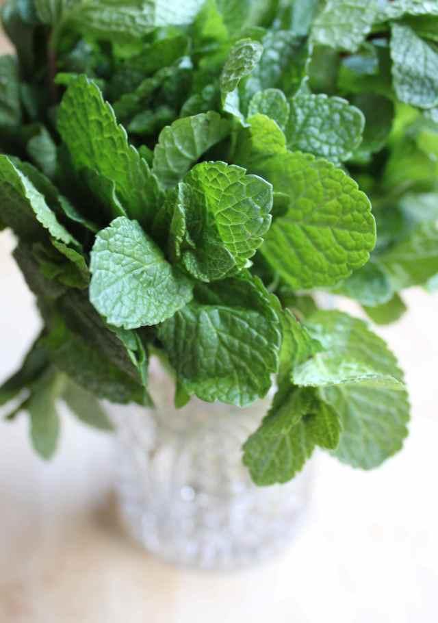 Mint leaves in jar