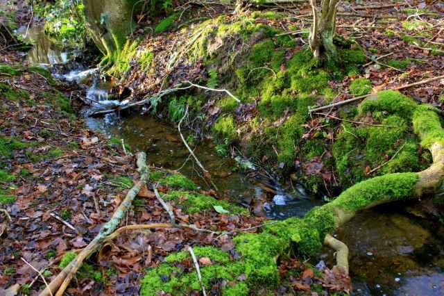 Moss and running water