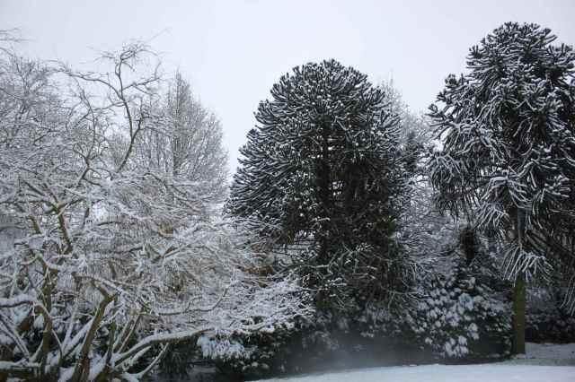 snow scene 2
