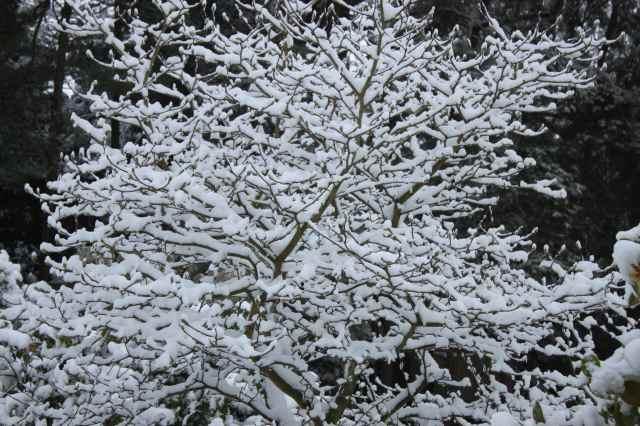 snow scene 5
