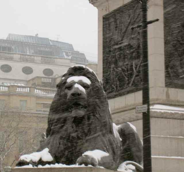 Snowy lion