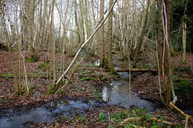 streams in woods