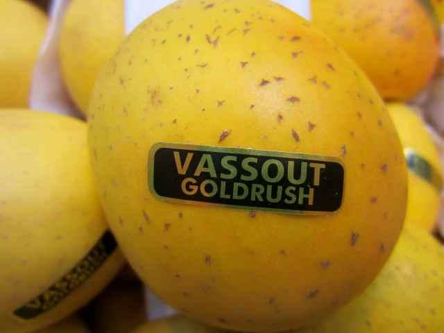 Vassout Goldrush