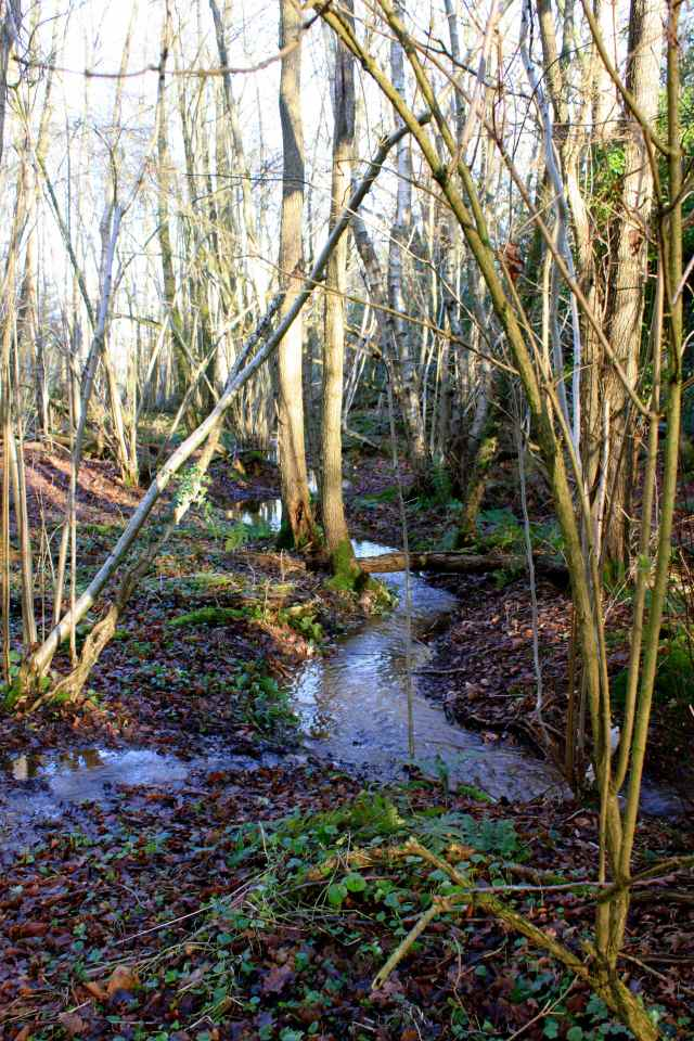 woodland water 1