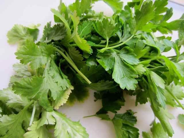 parsley and coriander