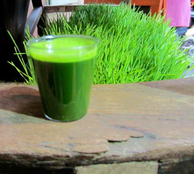 wheatgrass and shot