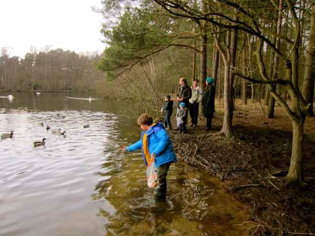 Feeding the ducks and swans