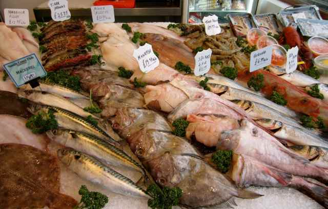 Fish display 2