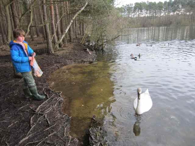 Harvey and swan