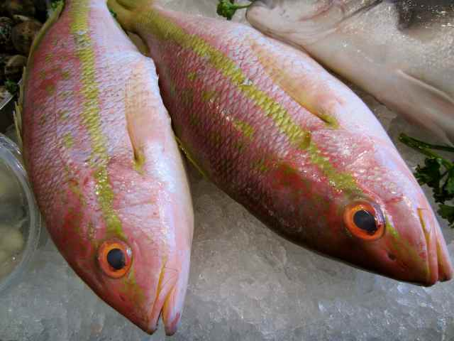 Red Snappers close up