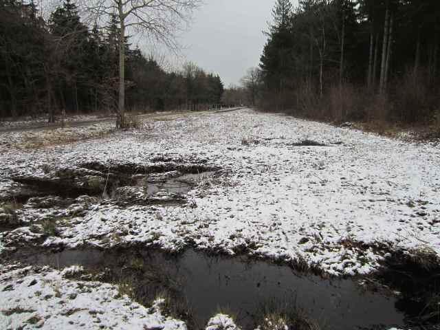 Snow in Blean