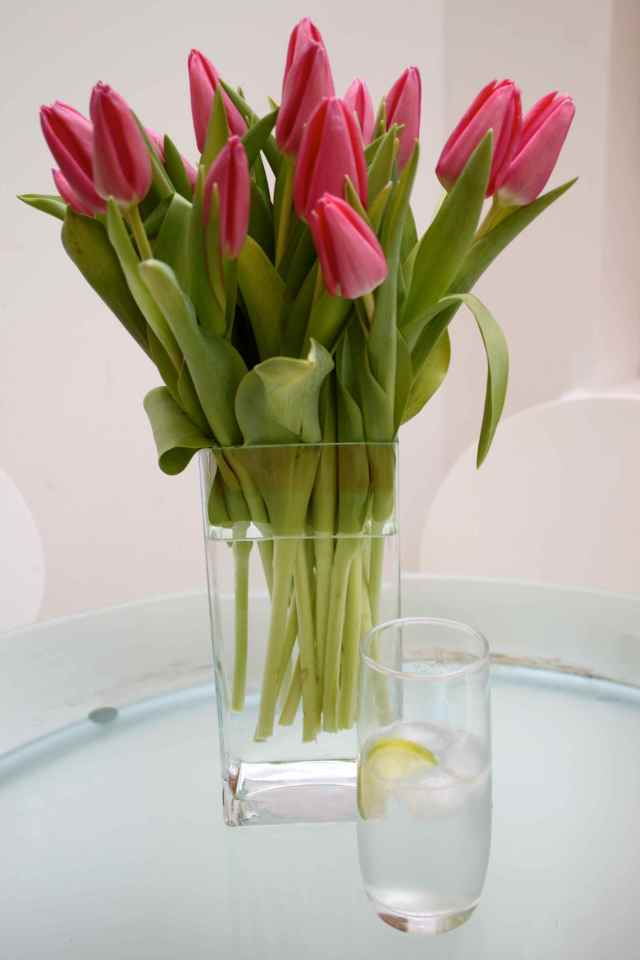 Tulips with G&T