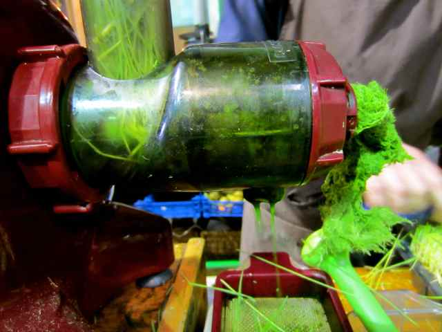 wheatgrass juicer 2