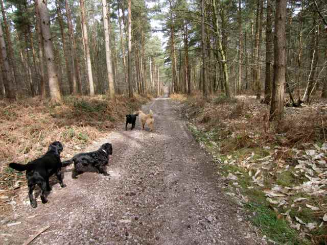 4 dogs in woods