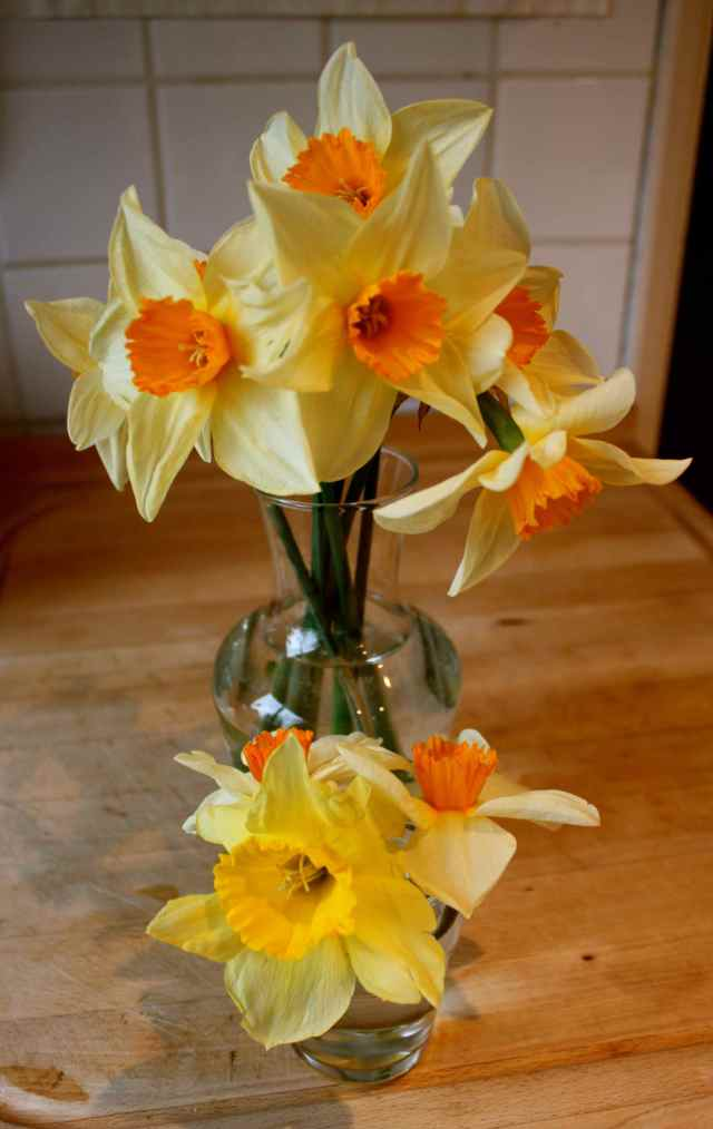 Dafs in 2 vases