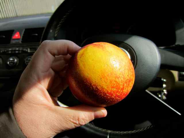 nectarine in car
