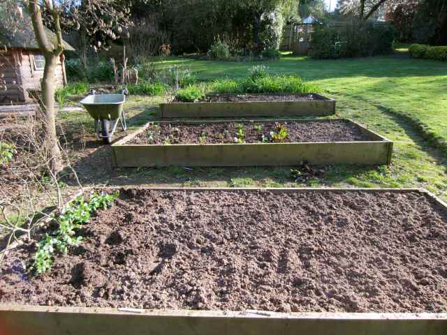 Veg beds April 2013