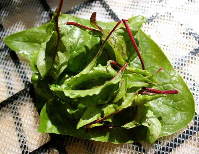 Beetroot leaves and spinach
