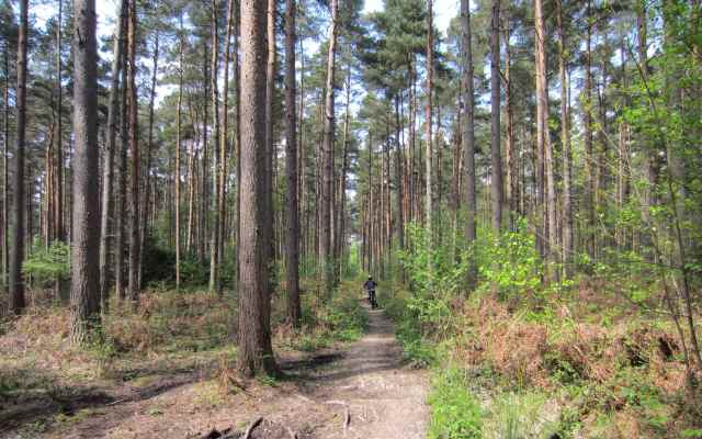 cycling in forest