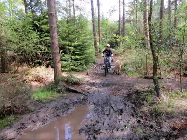 Harvey and mud