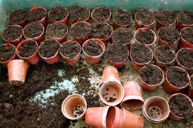 Little flower pots