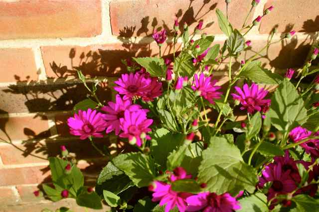 Senetti by brick wall