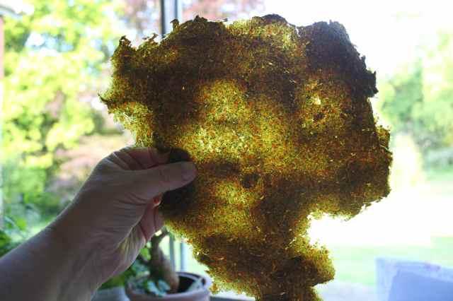 veg pulp dried