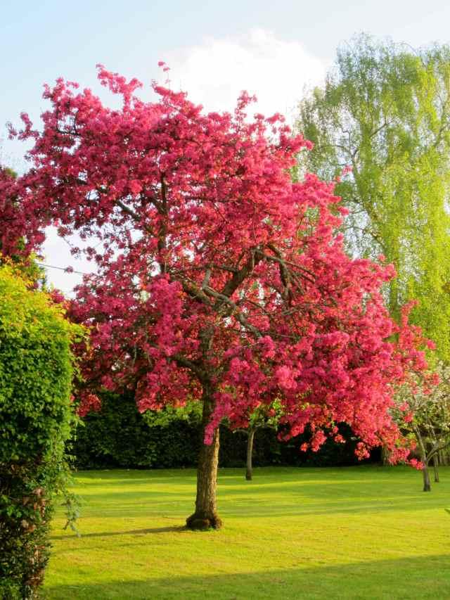 very pink tree