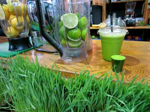 Wheatgrass and green shot