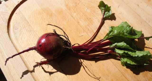 Beetroot on board