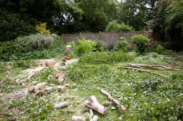 Logs on lawn