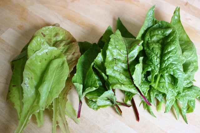 Making salad 9-6-13 4