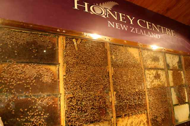 Bees in Honey Centre