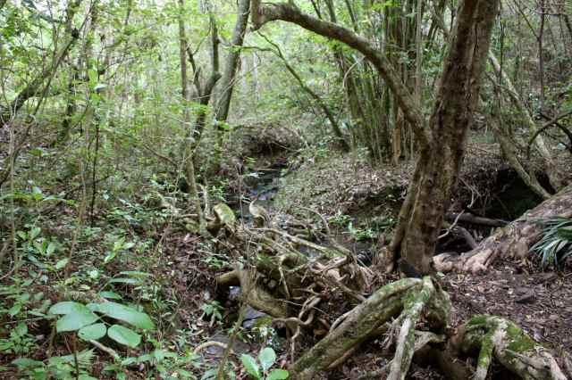bush walk 2