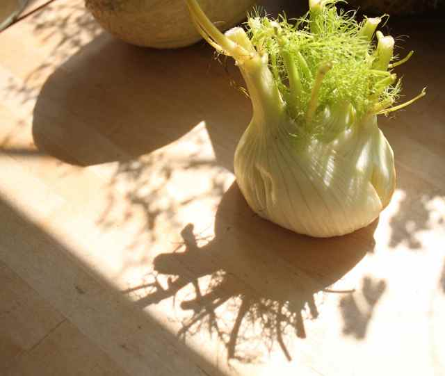 Fennel and shadow