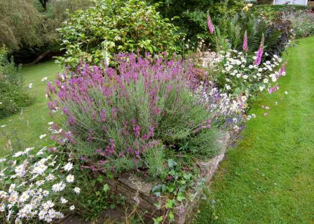 flower beds 2
