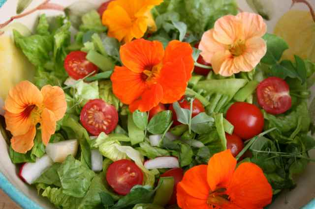 garden salad 2