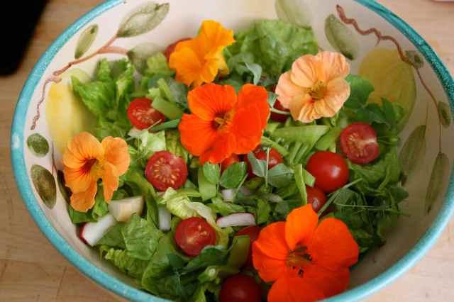 garden salad 3