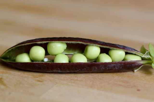green peas purple pod