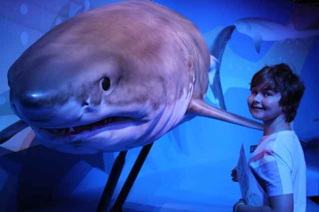 H and shark