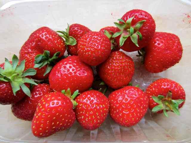 strawberries 15-7-13