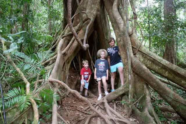 children in buttress roots