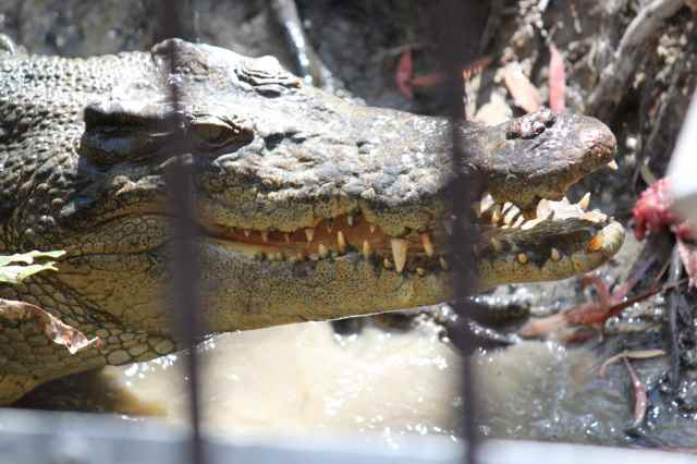 Croc 6