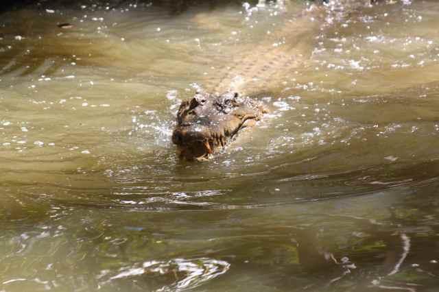 croc 7