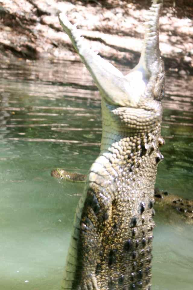 croc jumping