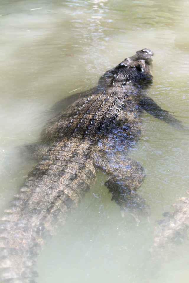 crocs 1